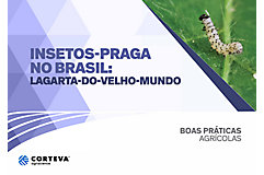 Insetos praga no Brasil: Lagarta-do-velho-mundo