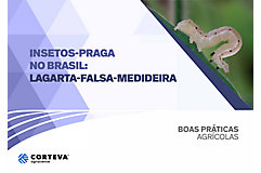 Insetos praga no Brasil: Lagarta-falsa-medideira