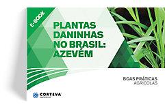 Plantas daninhas no Brasil: Azevém