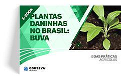 Plantas daninhas no Brasil: Buva