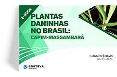 Plantas daninhas no Brasil: Capim-massambará
