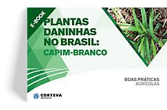 Plantas daninhas no Brasil: Capim-branco