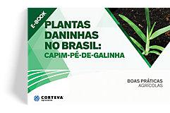 Plantas daninhas no Brasil: Capim-pé-de-galinha