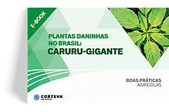 Plantas daninhas no Brasil: Caruru-gigante