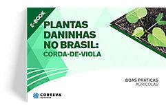 Plantas daninhas no Brasil: Corda-de-viola