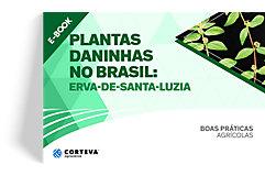 Plantas daninhas no Brasil: Erva-de-Santa-Luzia
