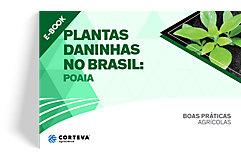 Plantas daninhas no Brasil: Poaia