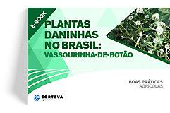 Plantas daninhas no Brasil: Vassourinha-de-botão