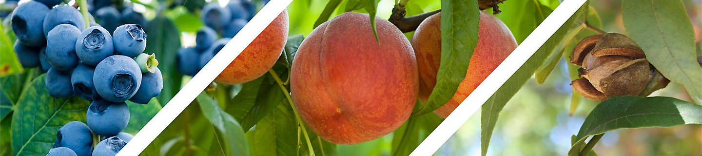 fruit and nut header image