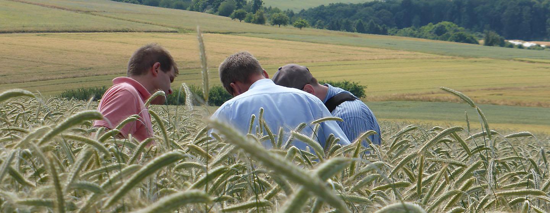 2 mænd studerer korn