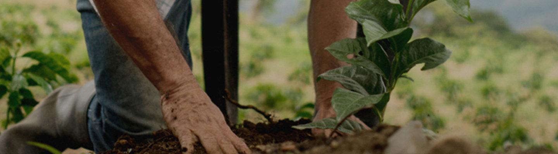 Agricultor sembrando