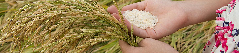 child rice holding