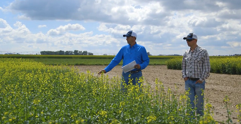 From Canola Breeding to Seeding - Part 4 - The Production Research Group