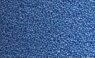 Blue canola seed