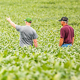 Image of two men walking in a corn field