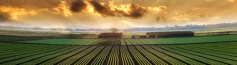 Campo plantado em pôr do sol