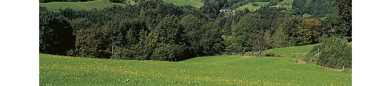 Ranger selektives Herbizid Wiesen Weiden