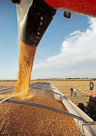 Harvesting Corn- Combine to Weigh Wagon