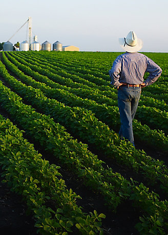 Farmer Examining Crop landscape