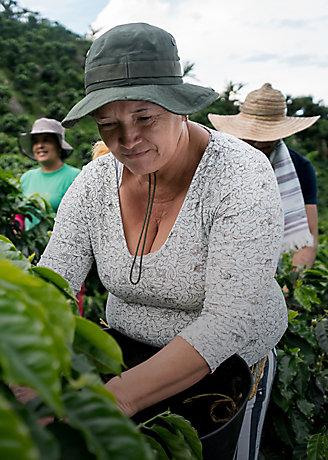 Female farmers harvesting in field