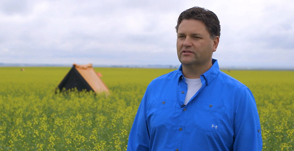 From Canola Breeding to Seeding - Part 3 - Hybrid Seed Production