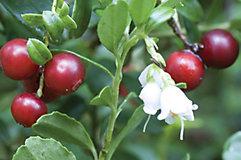 Cherry fruit blossoms