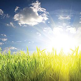 Grass and bright sun