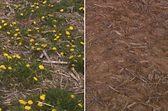 Field untreated and treated with Guardian MAX