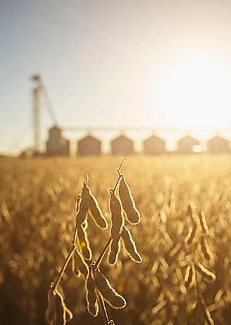 Amanhecer no campo semeado