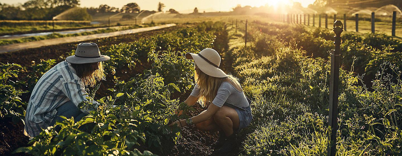 Новости сельское хозяйство