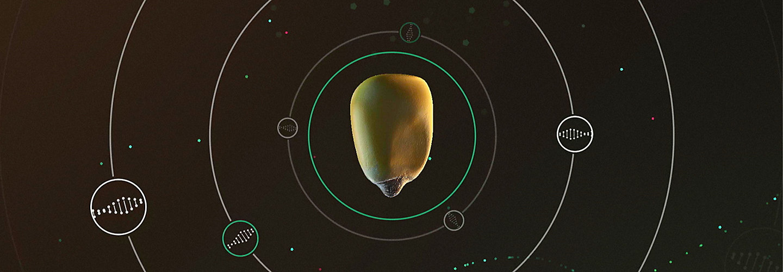 Corn Revolution - updated