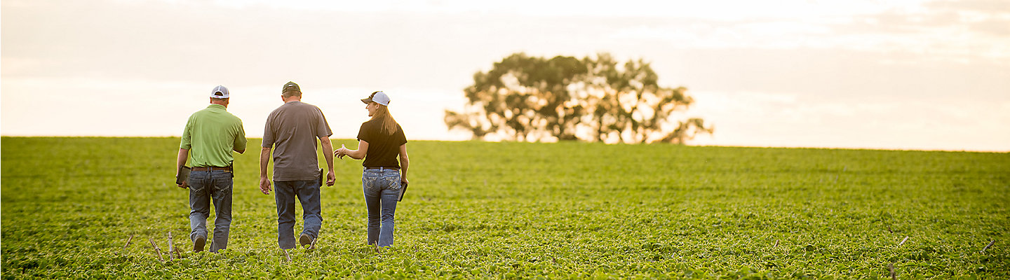 A grower, rep and agronomist walking a field of young soybean plants