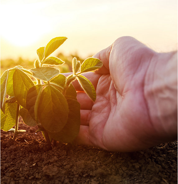 Sunlight behind hand holding plant