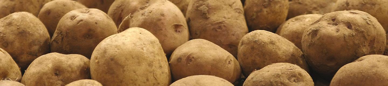 马铃薯特写图