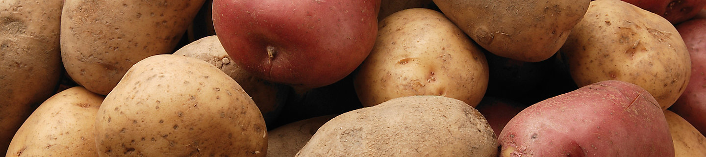 Group of white and red potatoes