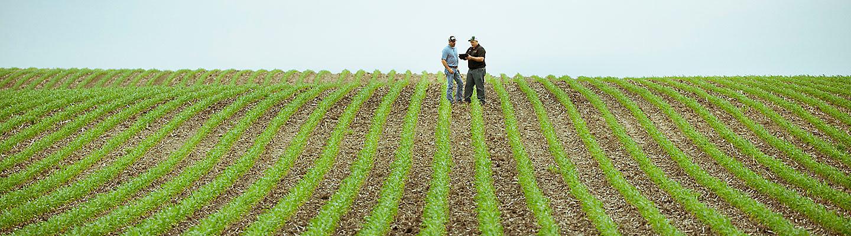 Dois homens ficar em um campo