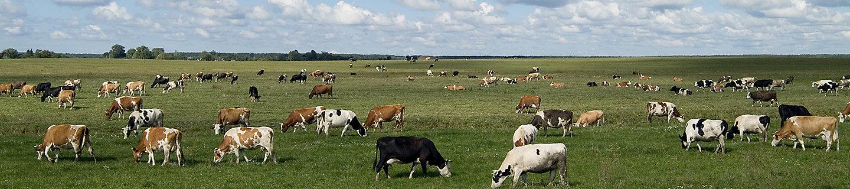 草原牧场风景图