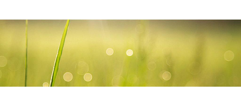IMG-Ryegrass-CloseUp-3-6_1