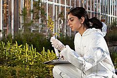 Female scientist checking plant