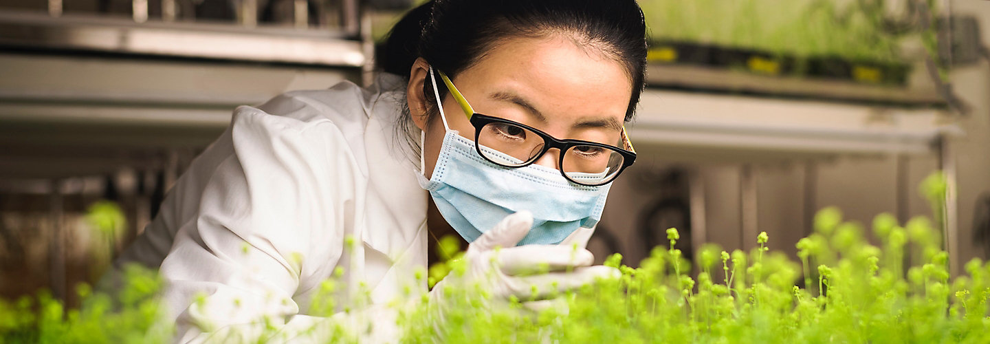 Asian scientist with glasses examining plants in laboratory