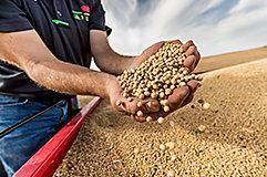 Imagen de manos con semillas desktop