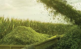 Silage corn harvest