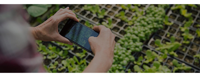 Smartphone neemt foto van planten