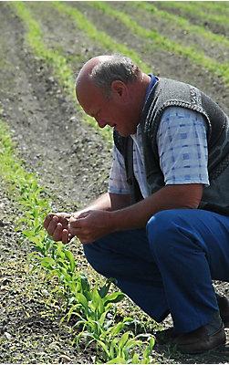 Агрономічні сервіси