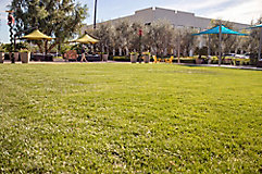 Image of commercial use outdoor lawn space