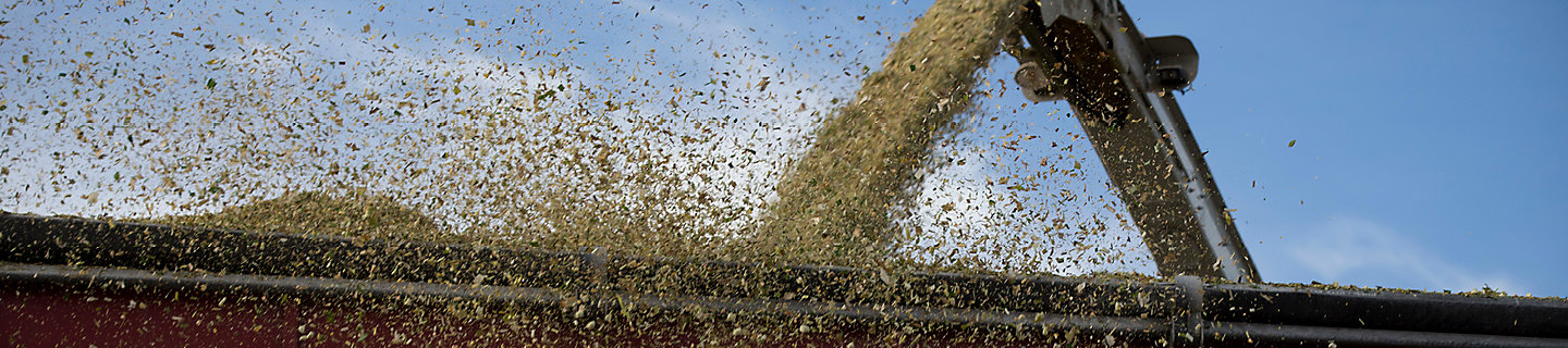 Corn Silage, harvest