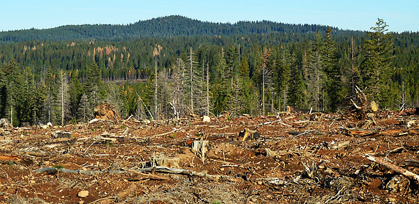 forest of trees with forefront cut down