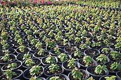 Image of plants in pot in nursery