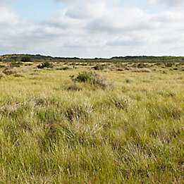 Image of open pasture