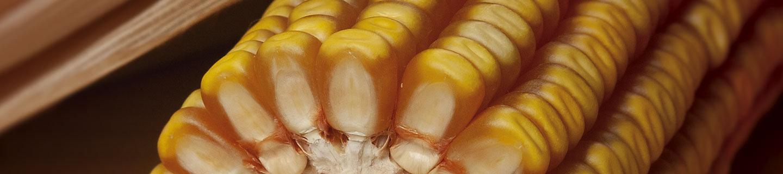IMG-product-generic-corn-desktop